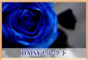DAISYセレクト